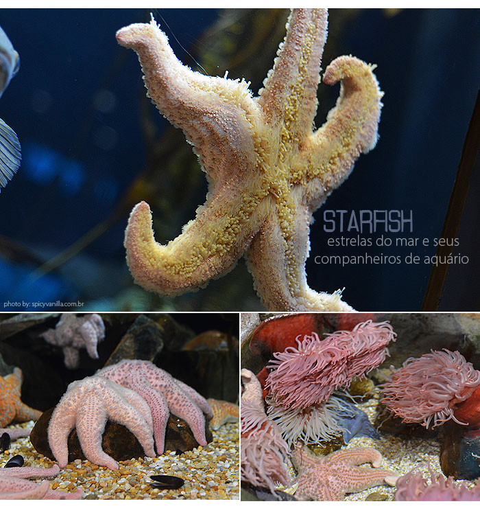 georgia_aquarium_10