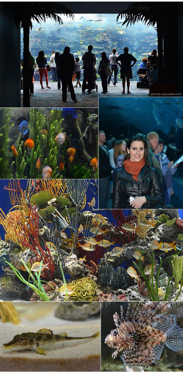 georgia_aquarium_2