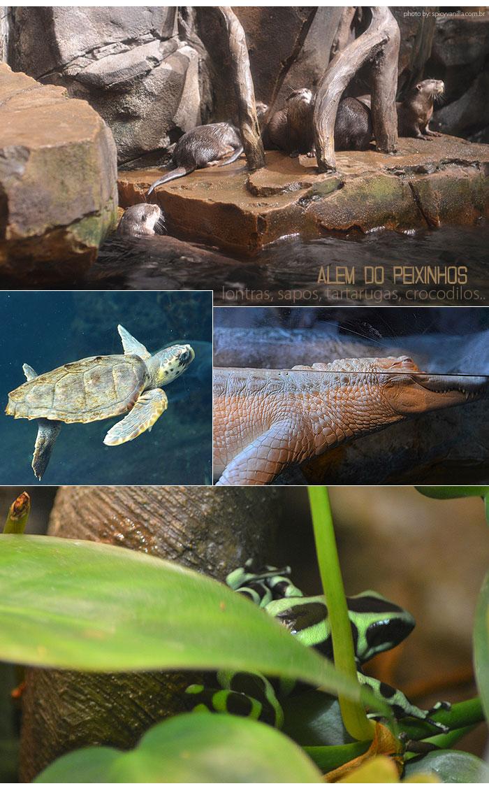 georgia_aquarium_3
