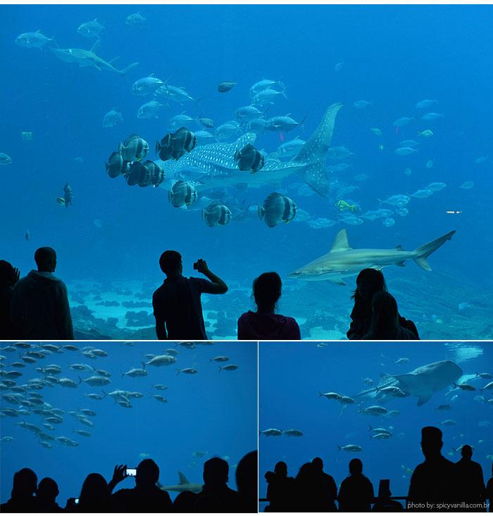 georgia_aquarium_7