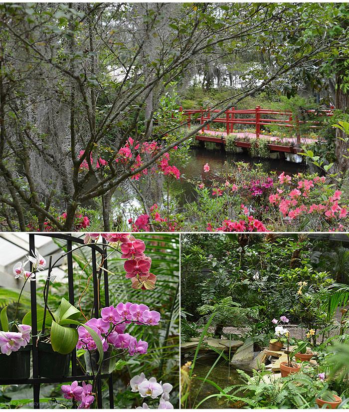 magnolia_plantation_flores