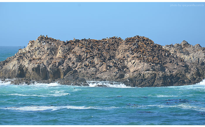 17_mile_drive_bird_rock