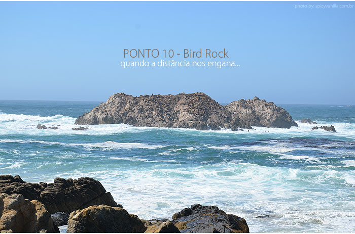 17_mile_drive_bird_rock_10