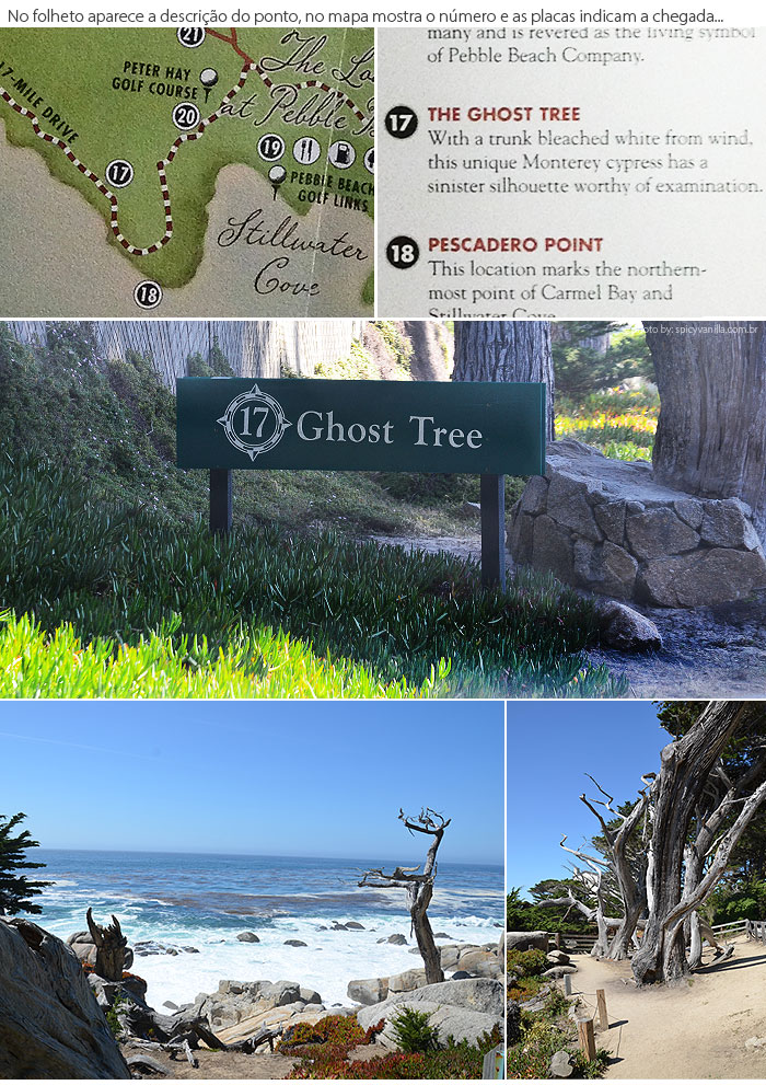 17_mile_drive_ghost_tree