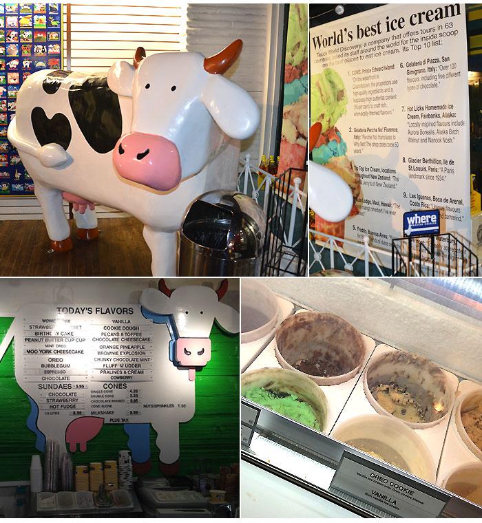 comidinhas_banff_cows