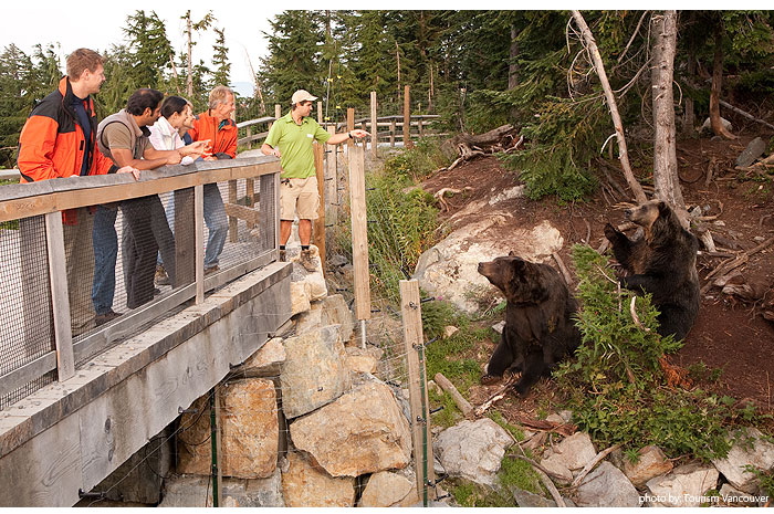 grouse_mountain_bear