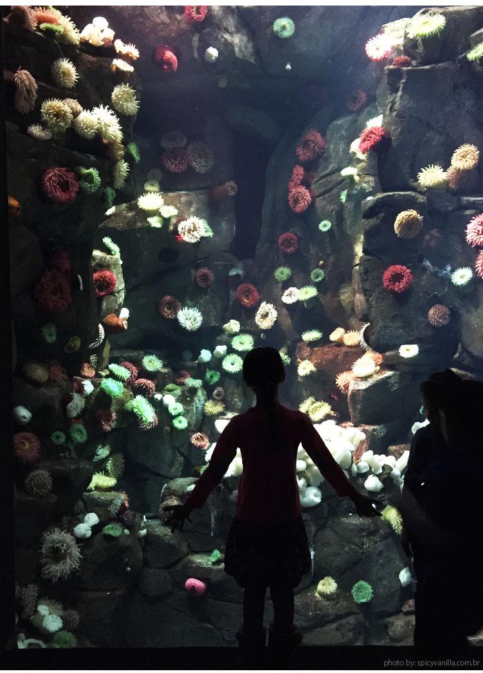 ripleys_aquarium_agua