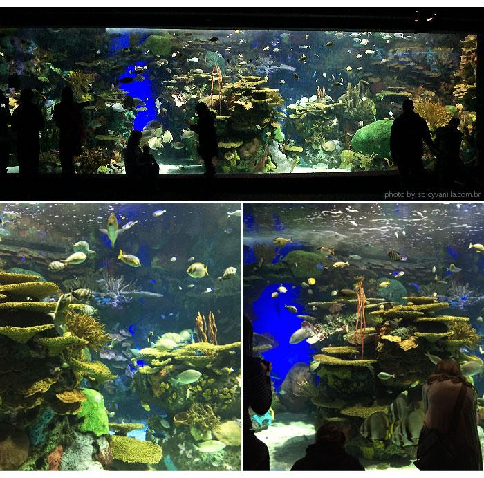 ripleys_aquarium_aquario