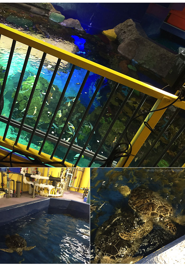 ripleys_aquarium_backstage