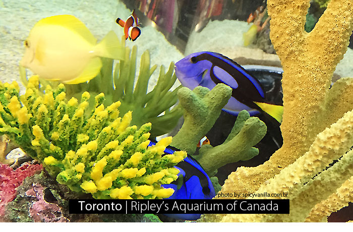 ripleys aquarium capa - Toronto | Ripley's Aquarium of Canadá