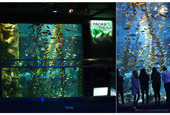 ripleys_aquarium_pacific