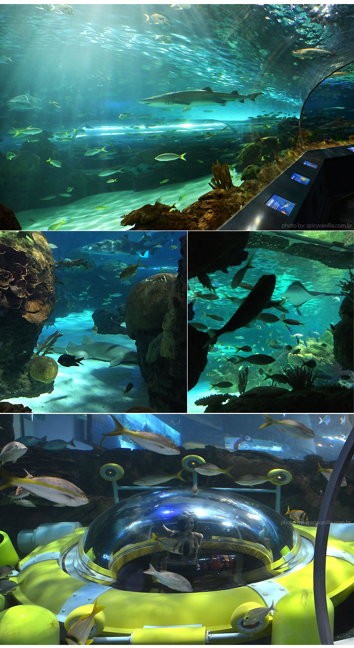 ripleys_aquarium_submarino