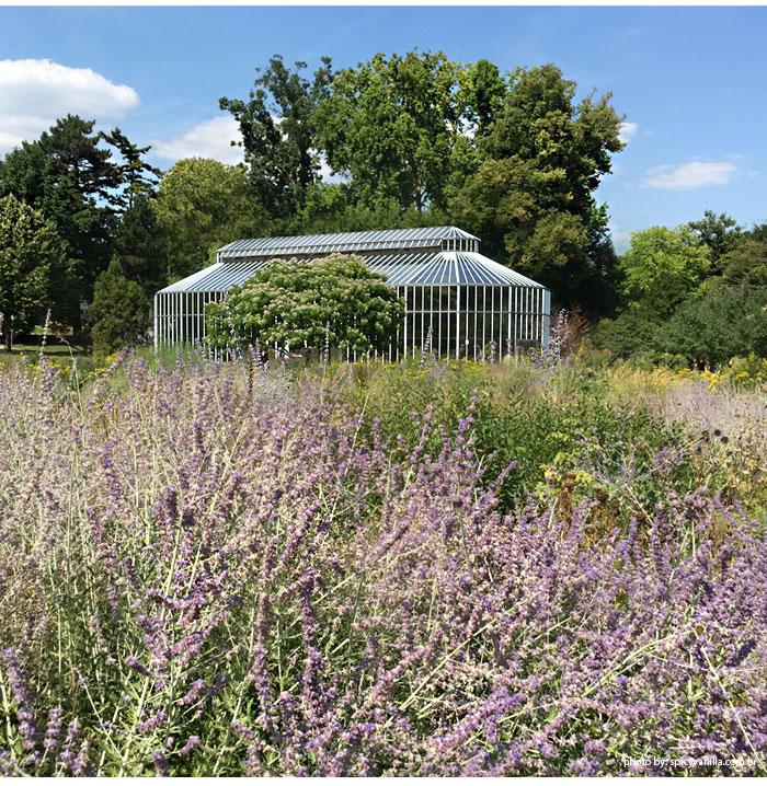 jardim-botanico-frankfurt