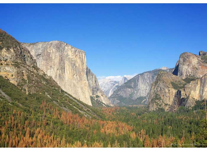 yosemite-spicy-vanilla