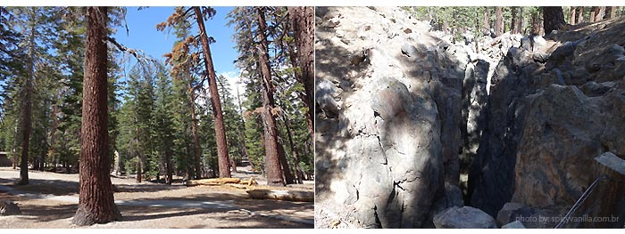 mammoth-earthquake-falt