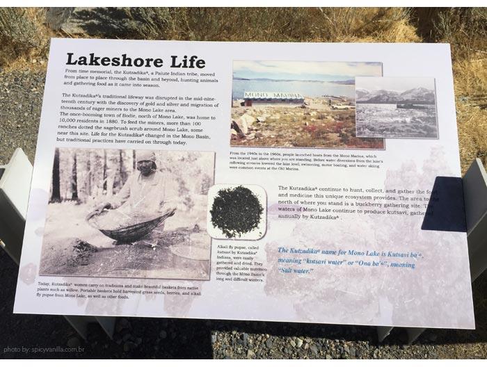 mono-lake-lakeshore